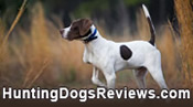 Hunting Dogs Reviews